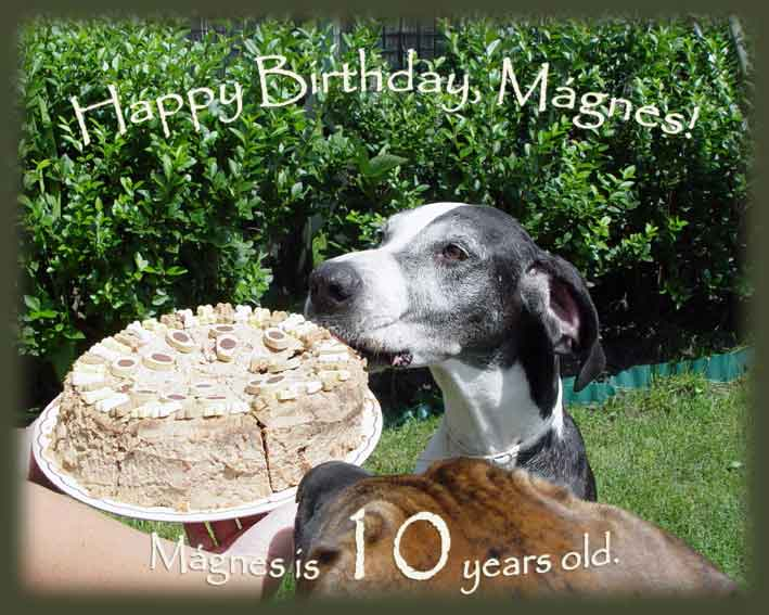 Happy Birthday, Mágnes!